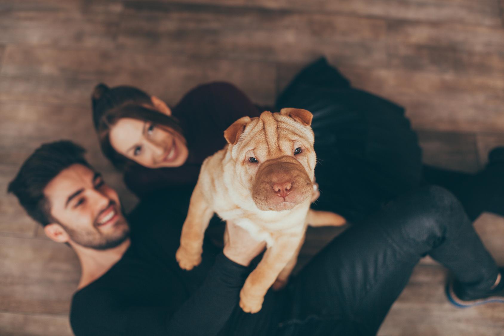 Happy couple holding Shar Pei puppy